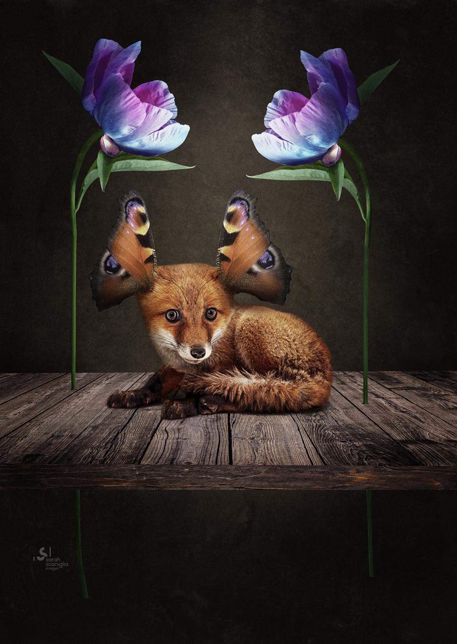 Sarah-Scaniglia-bestiaire-culture-fine-art-nantes-photographe-animaux-nanture-imaginaire-studio-photo-photoshop-compositing-artiste-Renard-papillon-fleurs
