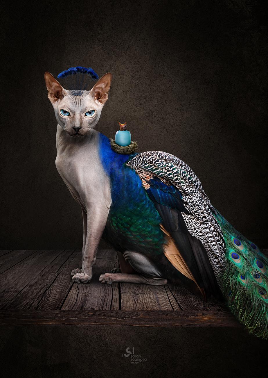 Sarah-Scaniglia-bestiaire-culture-fine-art-nantes-photographe-animaux-nanture-imaginaire-studio-photo-photoshop-compositing-artiste-chat-sphinx-paon-oiseau