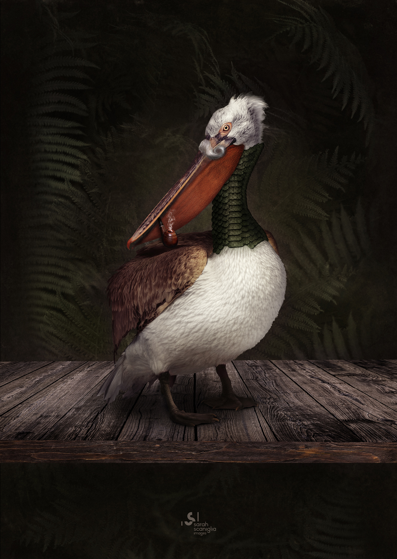 Sarah-Scaniglia-bestiaire-culture-fine-art-nantes-photographe-animaux-nanture-imaginaire-studio-photo-photoshop-compositing-artiste-pelican-reptile